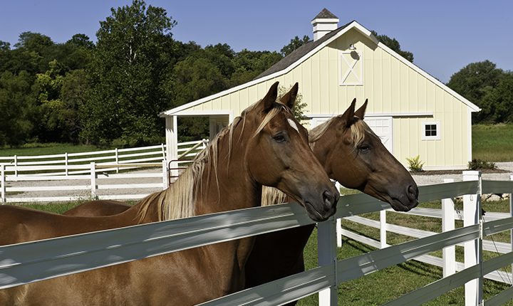 Two horses looking over white fence with barn in the background