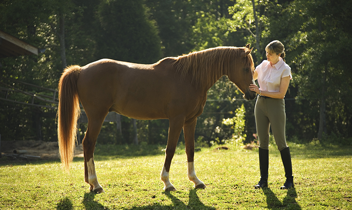Woman petting brown horse's face