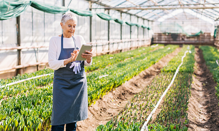 A woman wearing a blue apron and using an iPad, standing in a greenhouse with rows of green crops