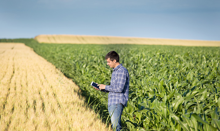 A man standing in a corn field wearing a plaid shirt working on an iPad