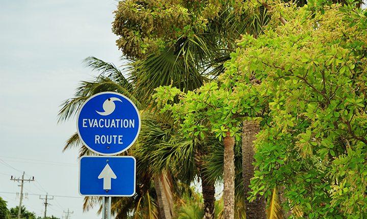 Coastal evacuation route highway sign beside trees