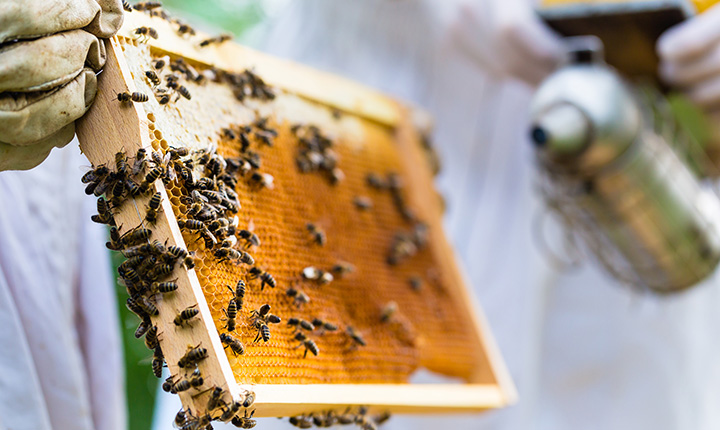 envs2210 apiculture and honey bee biology open learning