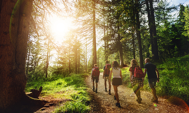 A group of people hiking in a forest with the sun shining through