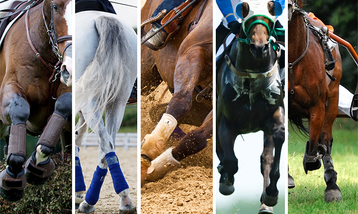 A collage of athletic horse images including eventing, dressage, barrel racing, thoroughbred racing and harness racing