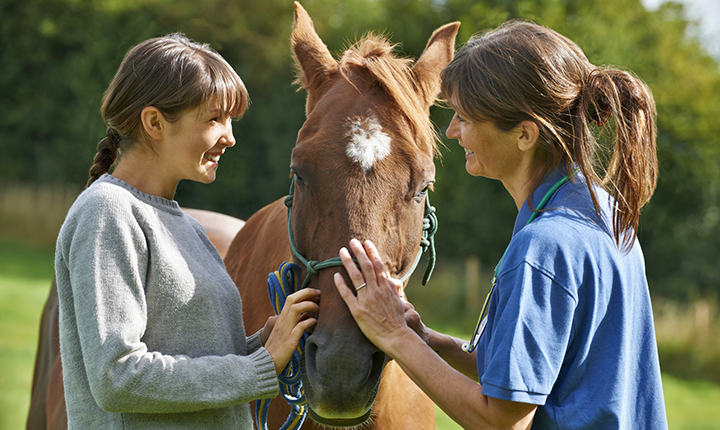 Two woman standing on either side of a brown horse, petting its face