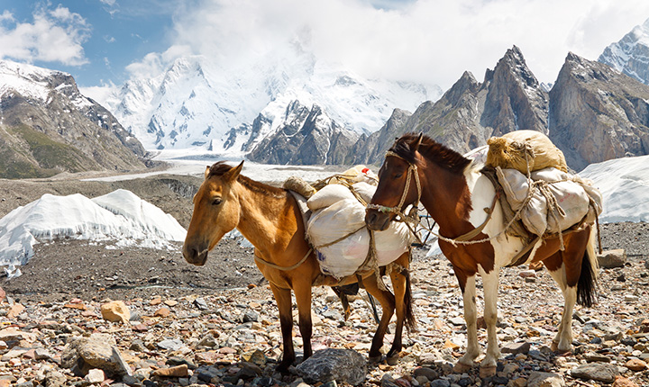 Two horses with loaded packs on their back standing in front of snow-topped mountains