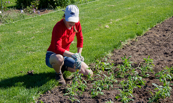 woman in red shirt and blue shorts tending to large garden