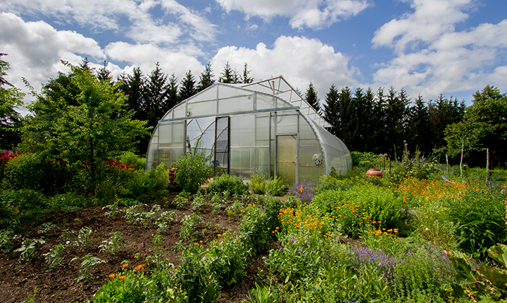 Flower and vegetable garden with greenhouse
