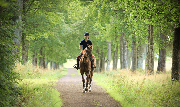 Woman riding horse on path through the woods