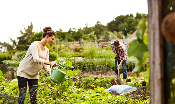 Two people working in a large vegetable garden plot