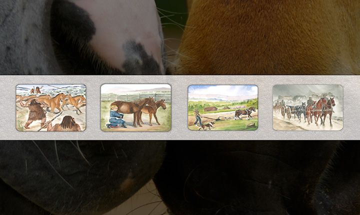 A hand-drawn timeline of the evolution of the domestication of horses in a film strip.