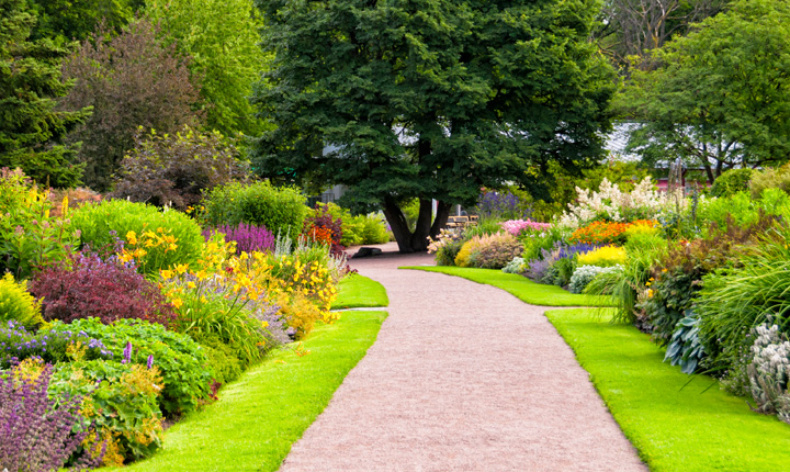 Colourful gardens on either side of a gravel pathway