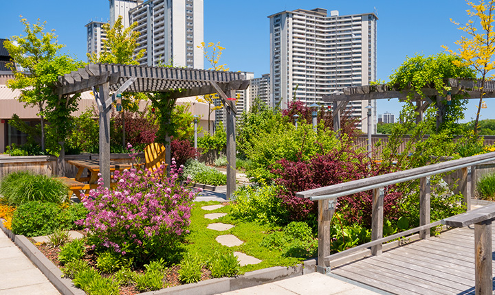 A colourful rooftop garden with high rises in the background