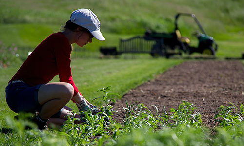 woman tending to large empty flower plot